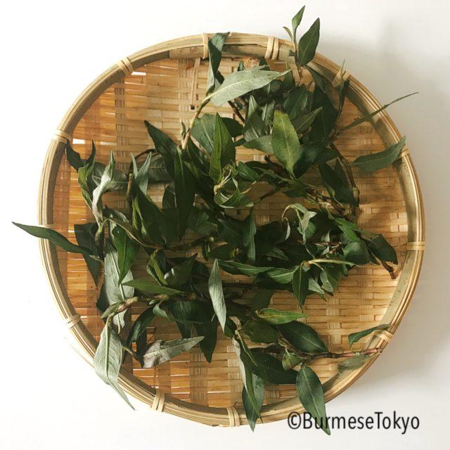 ミャンマーハーブ:パッペーリーフ(Phat phel leaf)