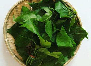 ミャンマー野菜:ゴーラカーユェ(はやとうりの葉)