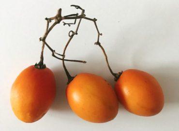 ミャンマー野菜:木トマト(タマリロ)