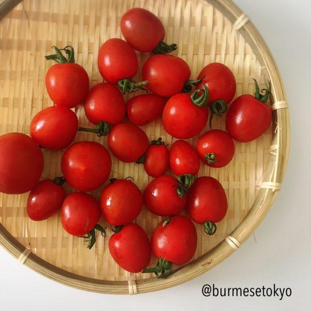 私の実家で取れた不揃いのトマトたち