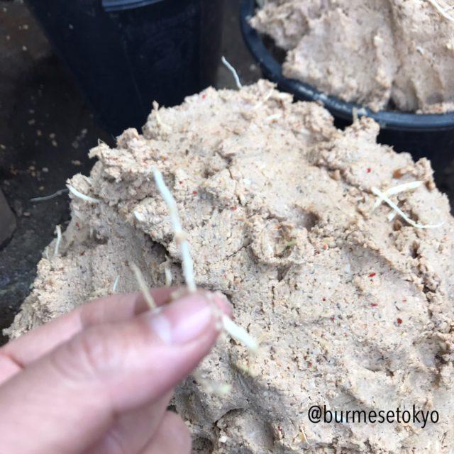 乾燥納豆を作る工程でジュミが練りこまれている画